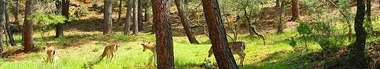 El Blog de Turismo En Cazorla . com - Blog de las Sierras de Cazorla, Segura y las Villas. foto de TurismoEnCazorla.com